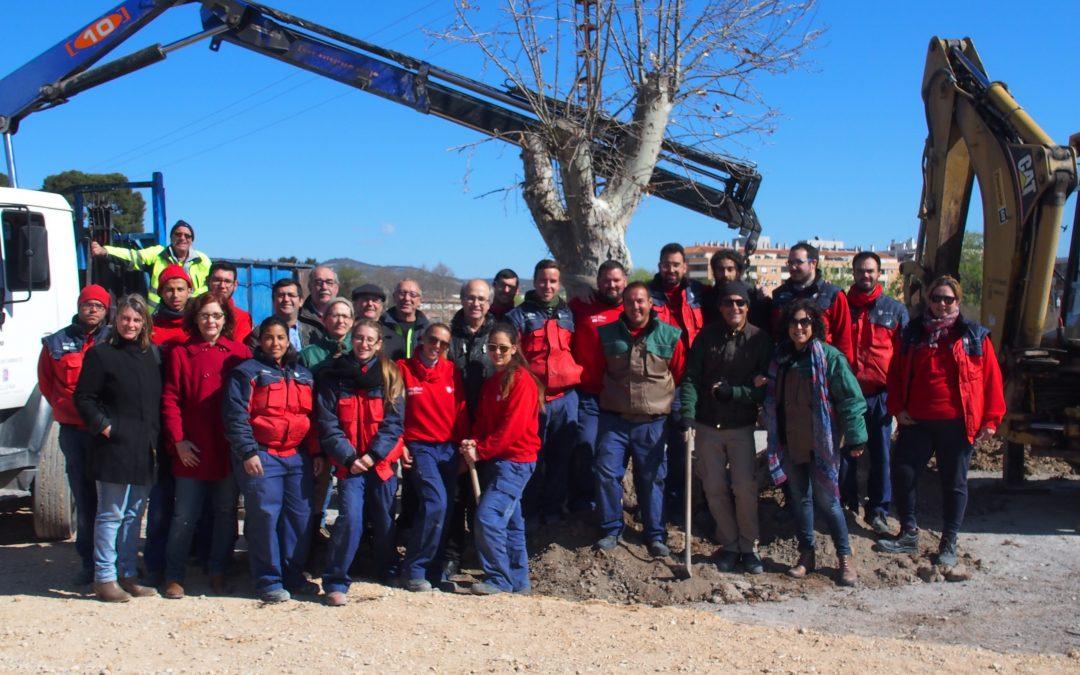 Plantación de árbol monumental en el futuro parque canino