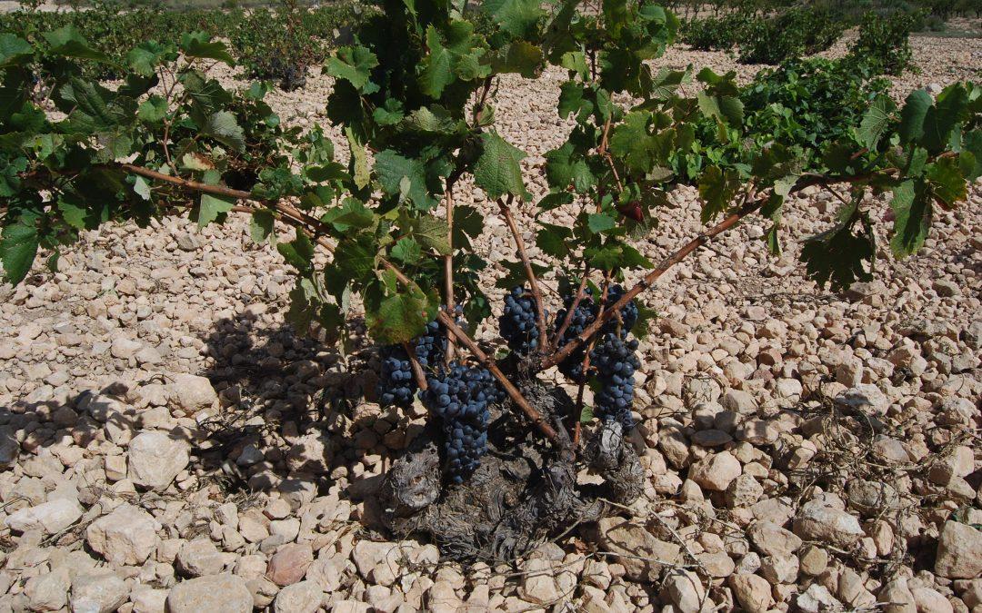 Curso gratuito de especialización en viñedo ecológico