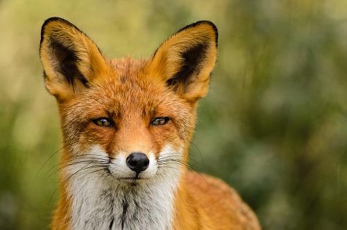 Villena aprueba un Consejo Municipal de defensa y protección animal